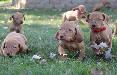 Litter available 10-4-12