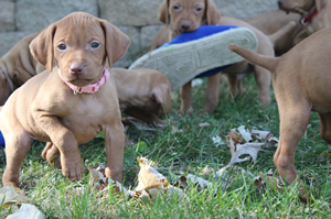 Litter Available 10/4/12